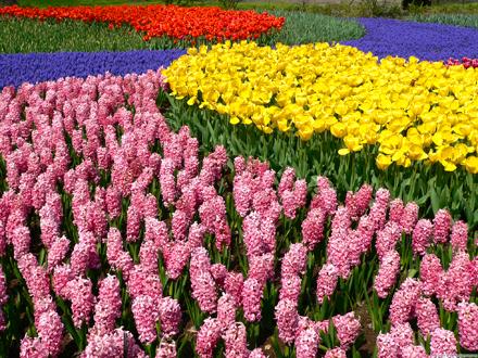 Esposizione di fiori uniche!
